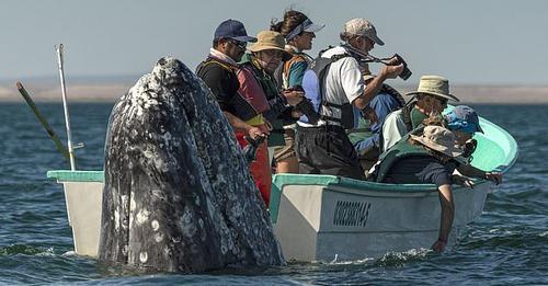 Momentet kur balena del prapa barkës së turistëve që e kërkonin në anën e gabuar